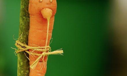La colère des agriculteurs biologiques s'organise