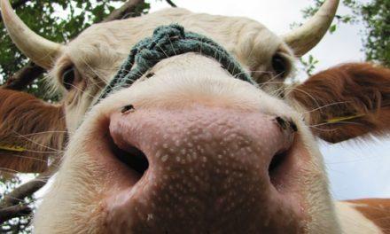 Agreste : la statistique agricole Edition 31/01/2018 PAYS DE LOIRE