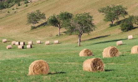 Enquête sur la structure des exploitations agricoles